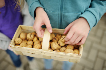 Child holding a basket of fresh walnuts.