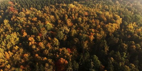 panoramic view over atumn forest