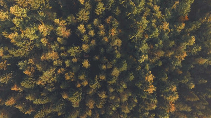autumn forest tree top view