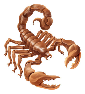 Scorpion Scorpio zodiac animal sign design graphic