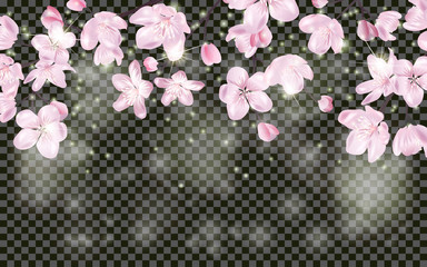 Detailed Blossoming sakura branch on transparent background. Spring or summer decoration. Realistic Cherry Blossom border. Spring design for cards, banners, flyers, party posters, headers.