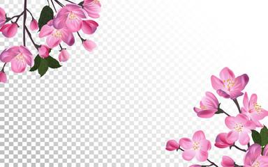 Detailed Blossoming sakura branch on transparent background. Spring or summer decoration.