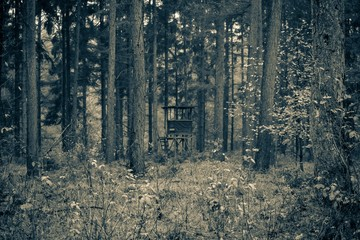 Hunter hut in a forest in black and white