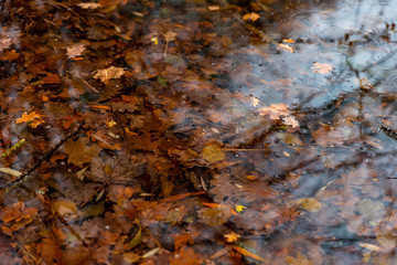 Accumulation de feuilles d'automne dans l'eau de l'étang