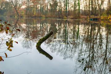 Branche d'arbre immergé en partie dans l'eau de l'étang