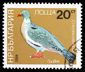 Common Wood-Pigeon (Columba palumbus), Birds serie, circa 1984