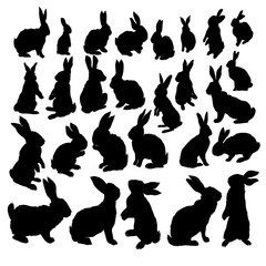 Rabbit Set, Isolated On White Background