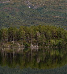 reflection of conifers in a calm lake
