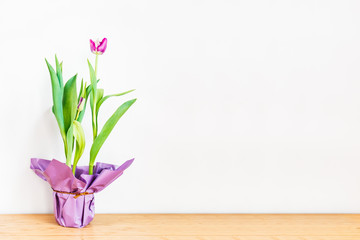 Pink tulip in a paper decorated pot on white wall background. Spring, holidays, mothers day, woman business concept