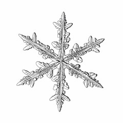 Snowflake isolated on white background. Vector illustration based on macro photo of real snow crystal: beautiful stellar dendrite with fine hexagonal symmetry, elegant arms and glossy, relief surface.