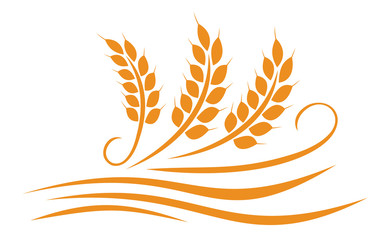 Agriculture wheat illustration design - vector