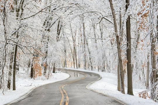 A winding road through a winter foest
