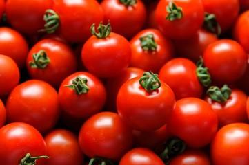 新鮮なトマトの収穫