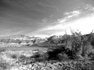 forbidding desert