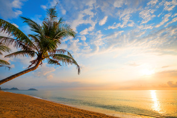 Fototapete - Seascape of beautiful tropical beach with palm tree at sunrise. sea view beach in summer background.