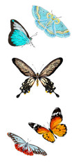 Set of various butterflies isolated on white background. Colorfull flying insects. Natural bright wildlife detailed illustration.