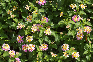 Floral postcard for your design
