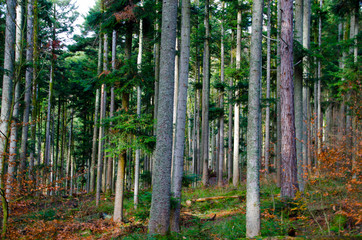 Vogesenwald im Spätherbst