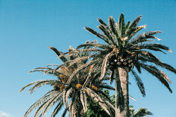 Palm trees against the blue sky on a sunny summer day.