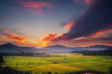 Wall Mural - Landscape of rice fields at the sunset scene, Countryside natural