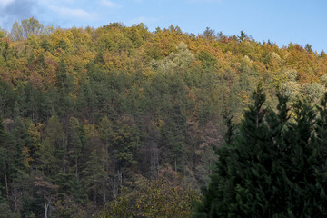 A hill with tall deciduous trees with colorful leaves under a blue sky in autumn
