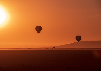 balloons flying over savanna