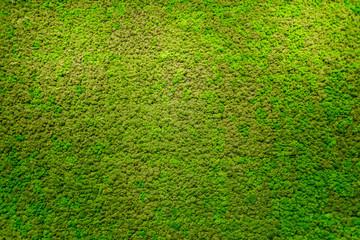 Green moss beautiful texture with good outdoor light