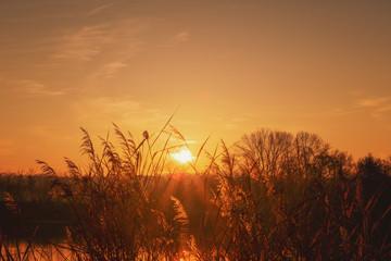 Good morning rising sun