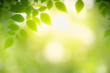 Closeup nature view of green leaf on blurred greenery background in garden with copy space using as background natural green plants landscape, ecology, clean fresh wallpaper concept.
