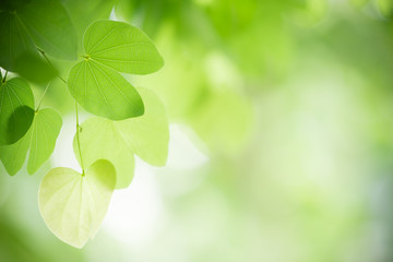 Closeup nature view of green leaf on blurred greenery background in garden with copy space using as background natural green plants landscape, ecology, fresh wallpaper concept. Fotoväggar