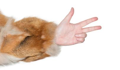 Frauenhand zeigt eine Gestik als Zeichensprache