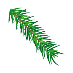 Pine tree branch isolated on white background, illustration vector.