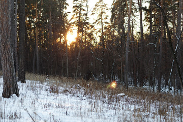 Landscape of winter forest at sunset