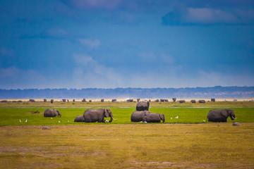 Kenya. Africa. Elephants. African elephant. Animals of Africa. Safari in Kenya. National parks.