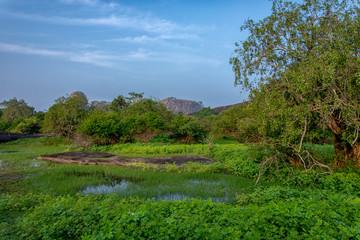 Beautiful sri lanka