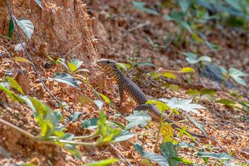wild animals of sri lanka