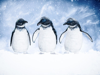 3D rendering of three penguins in snow.