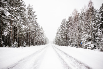 Snow-covered road through the pine forest on a cloudy winter day. Lahemaa national park, Estonia