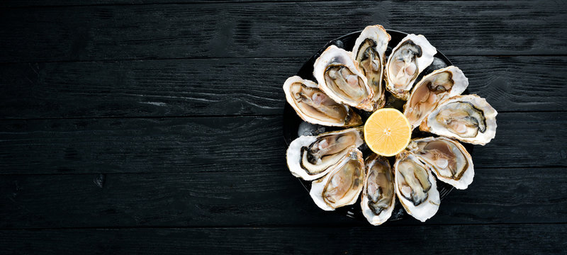 Fresh oysters in a plate of ice and lemon. Seafood. Top view. Free copy space.
