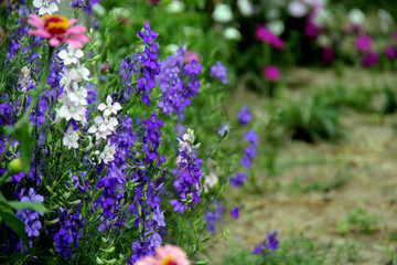 Bushes Of White And Lavender Flowers