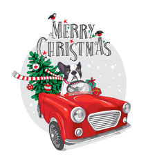 Christmas card. French Bulldog in a striped scarf with fir-tree inside of the red car. Vector illustration.