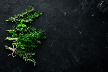 Wall Mural - Fresh green spices and herbs. Dill, parsley, rosemary. On a black stone background. Top view. Free copy space.