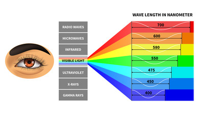 Visible light spectrum. Color waves length perceived by human eye. Rainbow electromagnetic waves. Educational school physics diagram. Scheme nanometer, rays electromagnetic spectrum illustration