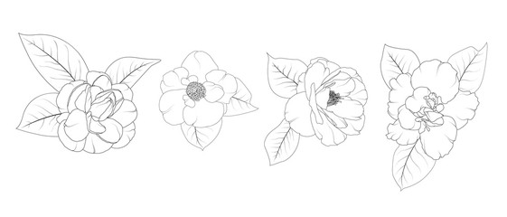 Camellia Japonica flower set isolated. Hand drawing and sketch line style. Black and white vector illustration.