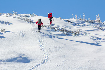 Back view of two tourist hikers with backpacks and hiking poles ascending snowy mountain slope on sunny winter day on white snow copy space background. Extreme sport, recreation, winter holidays.
