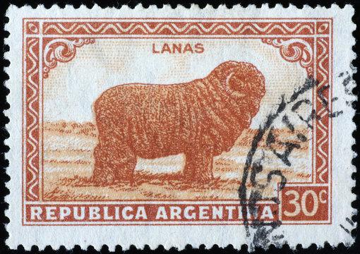 Sheep Merino on vintage postage stamp of Argentina