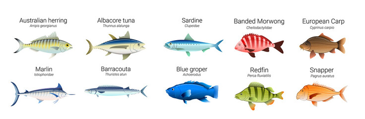 Set of Australian fish varieties illustration