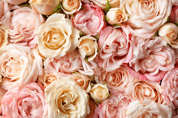 Many beautiful roses as background, top view Wall mural