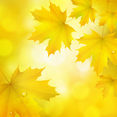 Natural yellow orange square background with maple leaves snd tree branches, vector autumn; background