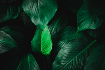 Blur closed up green leaf background.